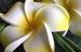 ハワイでフォトウエディングをスムーズに叶えるダンドリ
