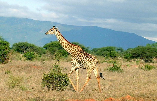 アフリカでウエディング