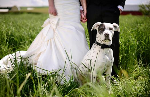 ペットと結婚式を楽しむ方法