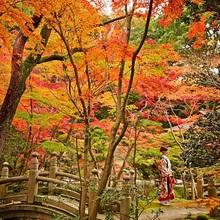 敷地内の紅葉が美しい秋のシーズン