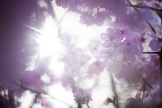 お得に桜ウェディングを叶えよう♪