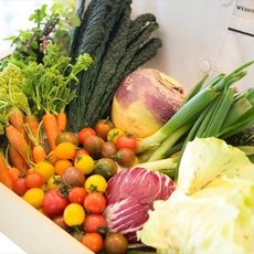 彩り豊かな糸島野菜