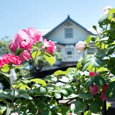 バラの中の洋館