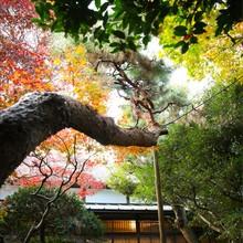 館内中央にある日本庭園は、この時期鮮やかな紅葉に色づく。