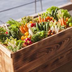 野菜をプランターから収穫してください♪
