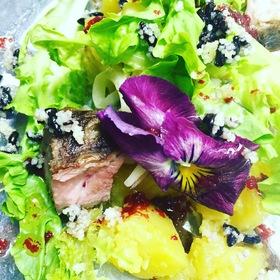 春ニシンのマリネと季節のサラダ