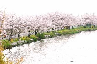 会場から桜を眺めながらお食事を楽しんでいただけます