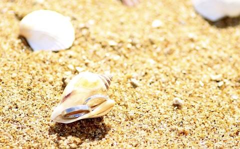 貝殻と指輪*